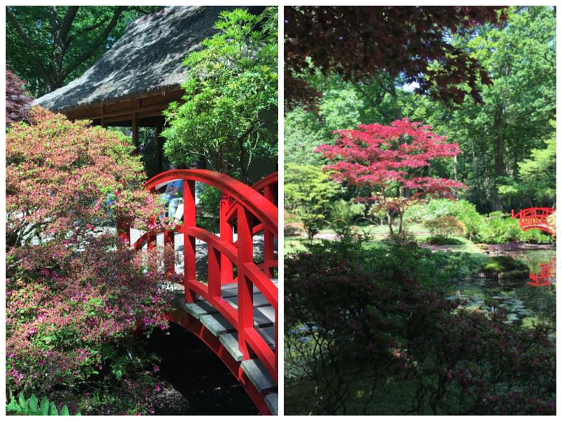 Den Haag Japanse Tuin Herfst