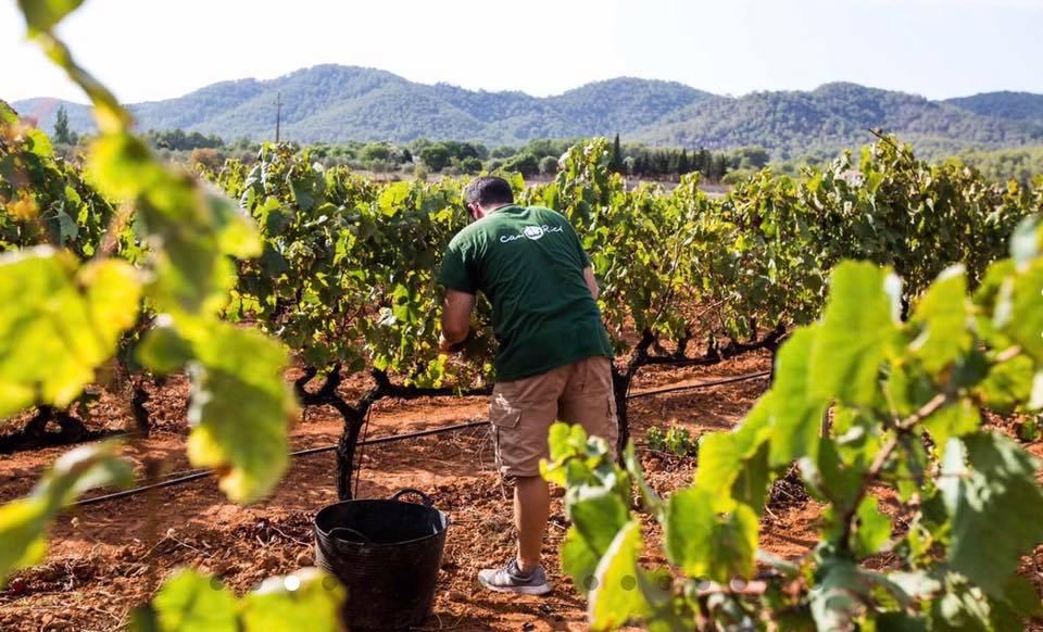 wijnproeverij op Ibiza