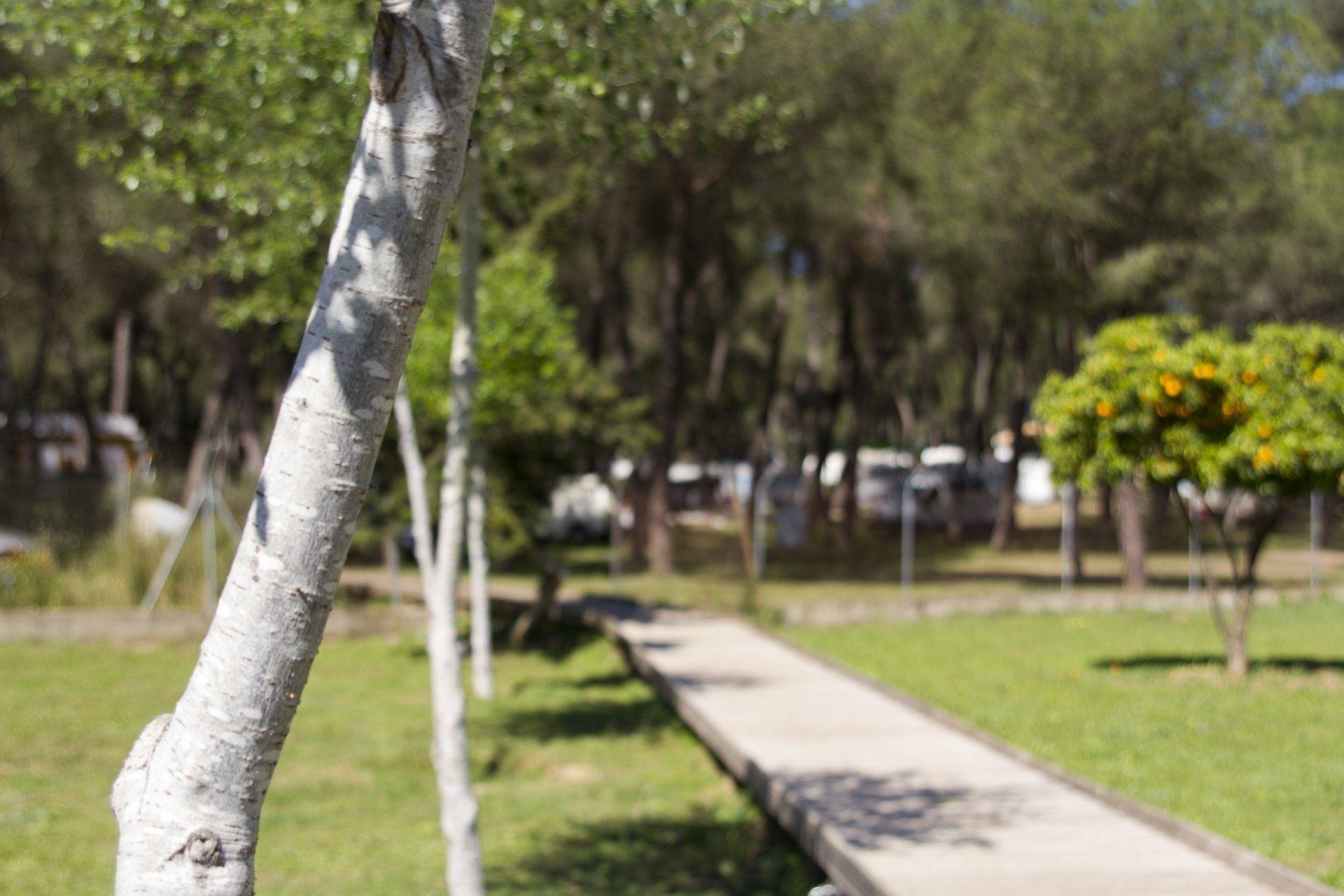 Campings-vlakbij-Sevilla_stedentrip_vanaf_de_camping
